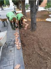 Adecuación y restauración de las parcelas del cementerio. Colocación de piedra canto rojo teja.